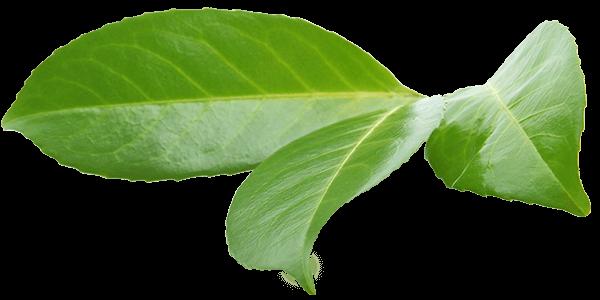 Ökologie & Nachhaltigkeit bei blizz-z